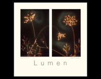 "Queen Anne's Lace - 2.75"" x 4.5"" Kodak Velox F-4. Paper expired 1947"